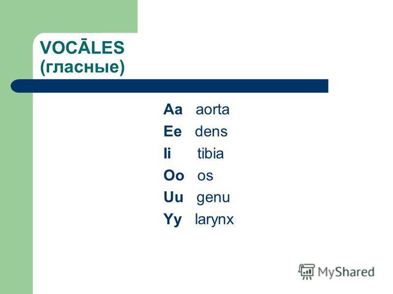 VOCĀLES (гласные) Aa aorta Ee dens Ii tibia Oo os Uu genu Yy larynx