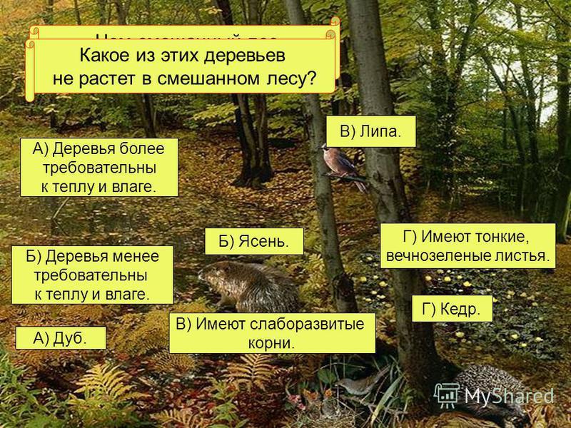 Чем смешанный лес отличается от хвойного? А) Деревья более требовательны к теплу и влаге. Г) Имеют тонкие, вечнозеленые листья. В) Имеют слаборазвитые корни. Б) Деревья менее требовательны к теплу и влаге. Какое из этих деревьев не растет в смешанном