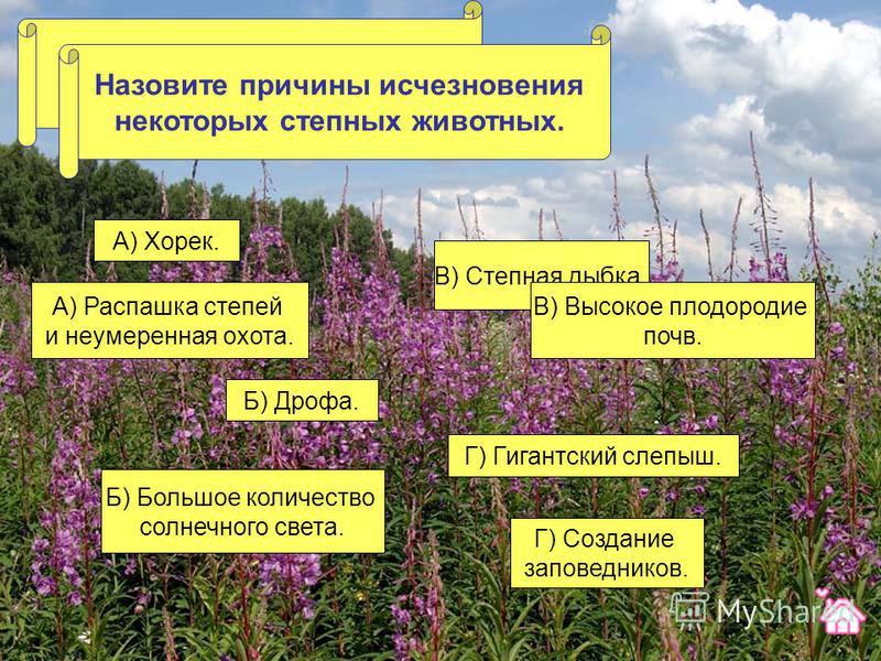 Какое из этих животных не живет в степи? В) Степная дыбка. Г) Гигантский слепыш. Б) Дрофа. А) Хорек. Назовите причины исчезновения некоторых степных животных. А) Распашка степей и неумеренная охота. В) Высокое плодородие почв. Б) Большое количество с