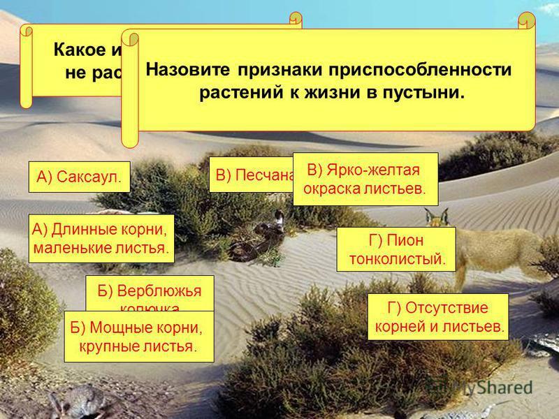 Какое из этих растений не растет в пустыне? А) Саксаул. Г) Пион тонколистый. В) Песчаная акация. Б) Верблюжья колючка. Назовите признаки приспособленности растений к жизни в пустыни. А) Длинные корни, маленькие листья. В) Ярко-желтая окраска листьев.