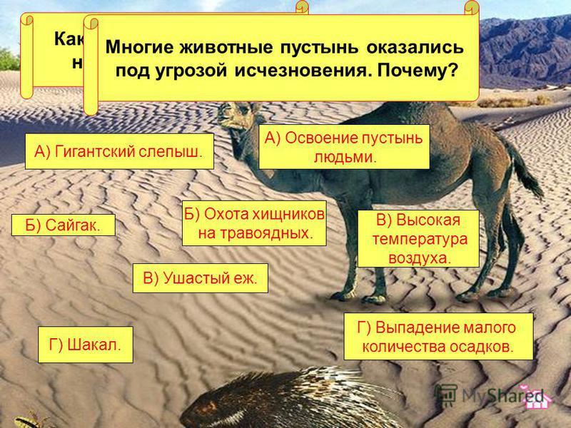 Какое из этих животных не живет в пустыне? В) Ушастый еж. Г) Шакал. Б) Сайгак. А) Гигантский слепыш. Многие животные пустынь оказались под угрозой исчезновения. Почему? А) Освоение пустынь людьми. Г) Выпадение малого количества осадков. В) Высокая те