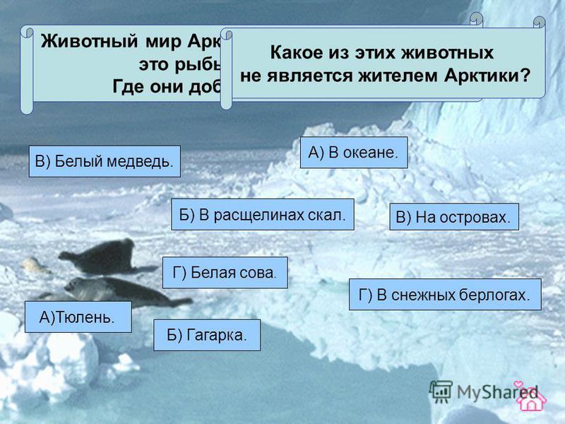 Животный мир Арктики относительно богат: это рыбы, птицы, звери. Где они добывают себе пищу? Б) В расщелинах скал. В) На островах. Г) В снежных берлогах. А) В океане. Какое из этих животных не является жителем Арктики? А)Тюлень. Б) Гагарка. В) Белый