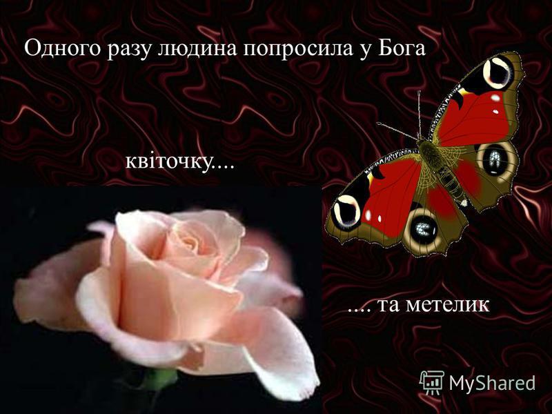 Одного разу людина попросила у Бога квіточку........ та метелик