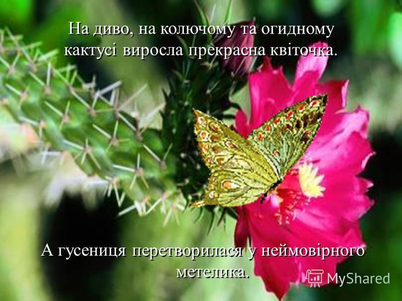 На диво, на колючому та огидному кактусі виросла прекрасна квіточка. А гусениця перетворилася у неймовірного метелика.