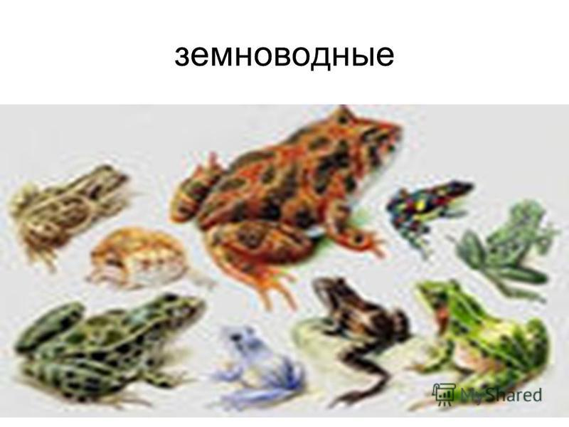 земноводные