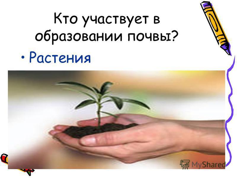 Кто участвует в образовании почвы? Растения