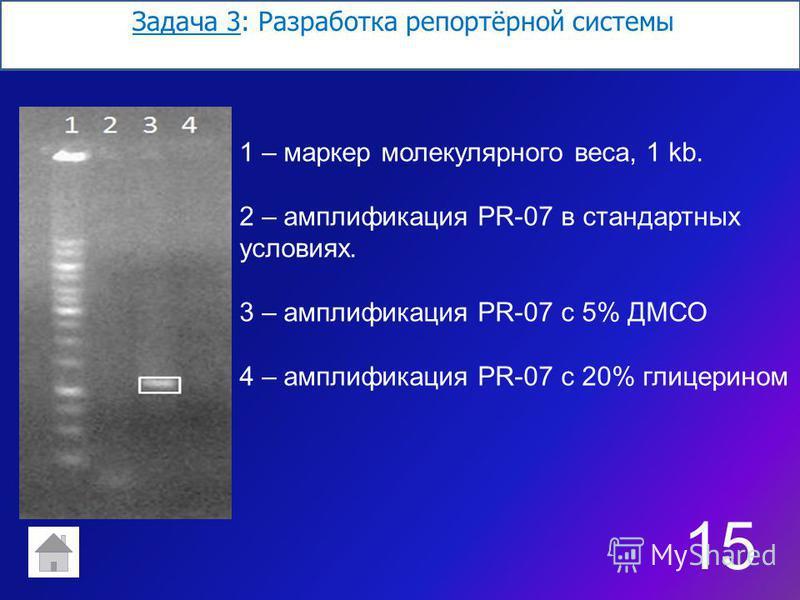 Задача 3: Разработка репортёр ной системы 1515 1 – маркер молекулярного веса, 1 kb. 2 – амплификация PR-07 в стандартных условиях. 3 – амплификация PR-07 с 5% ДМСО 4 – амплификация PR-07 с 20% глицерином