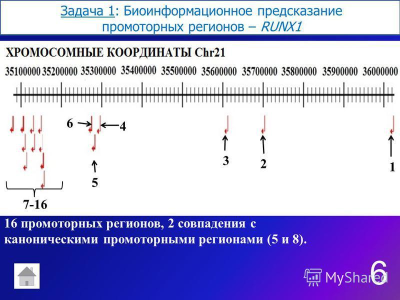 Задача 1: Биоинформационное предсказание промоторных регионов – RUNX1 6 1 5 2 3 4 6 7-16 16 промоторных регионов, 2 совпадения с каноническими промоторными регионами (5 и 8).