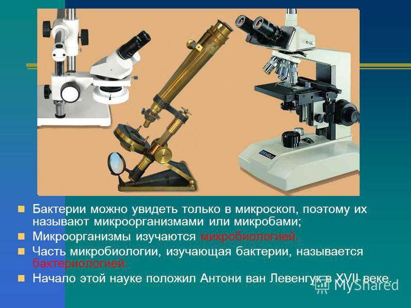 Бактерии можно увидеть только в микроскоп, поэтому их называют микроорганизмами или микробами; Микроорганизмы изучаются микробиологией. Часть микробиологии, изучающая бактерии, называется бактериологией. Начало этой науке положил Антони ван Левенгук