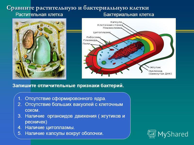 какие паразиты живут носоглотке человека