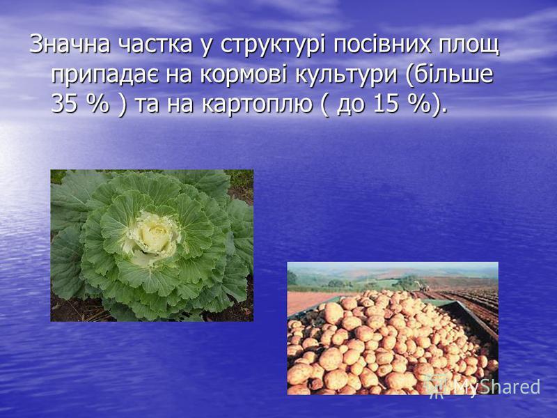 Значна частка у структурі посівних площ припадає на кормові культури (більше 35 % ) та на картоплю ( до 15 %).