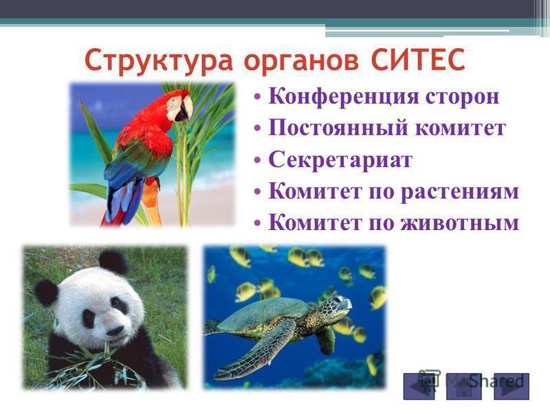 Конференция сторон Постоянный комитет Секретариат Комитет по растениям Комитет по животным Структура органов СИТЕС
