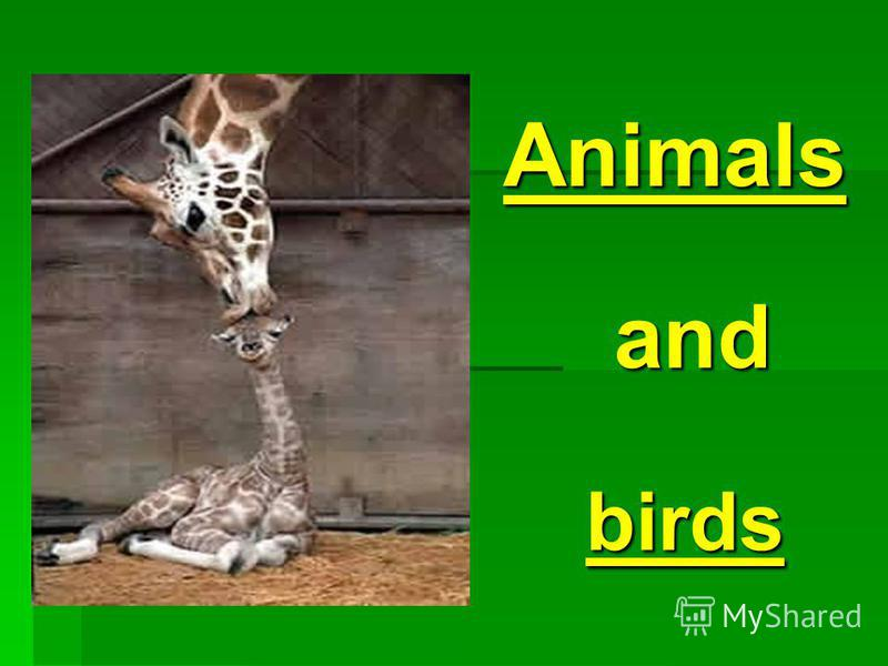 birds Animals and