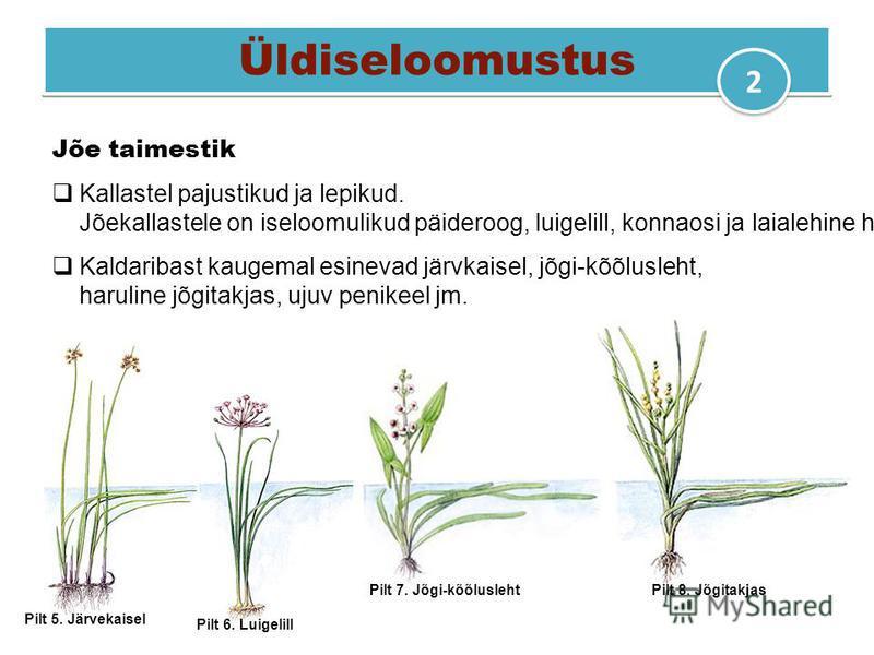 Üldiseloomustus Jõe taimestik Kallastel pajustikud ja lepikud. Jõekallastele on iseloomulikud päideroog, luigelill, konnaosi ja laialehine hundinui. Kaldaribast kaugemal esinevad järvkaisel, jõgi-kõõlusleht, haruline jõgitakjas, ujuv penikeel jm. Pil