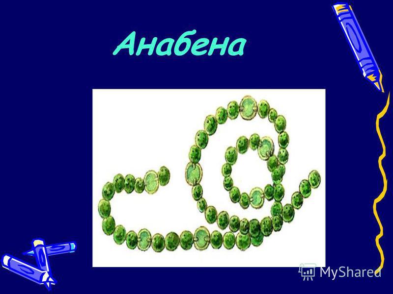 Анабена