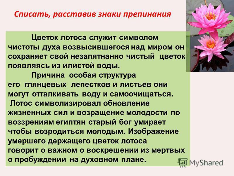 Списать, расставив знаки препинания Цветок лотоса служит символом чистоты духа возвысившегося над миром он сохраняет свой незапятнанно чистый цветок появляясь из илистой воды. Причина особая структура его глянцевых лепестков и листьев они могут оттал