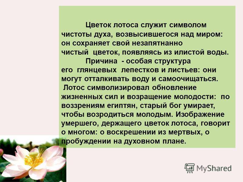 Цветок лотоса служит символом чистоты духа, возвысившегося над миром: он сохраняет свой незапятнанно чистый цветок, появляясь из илистой воды. Причина - особая структура его глянцевых лепестков и листьев: они могут отталкивать воду и самоочищаться. Л