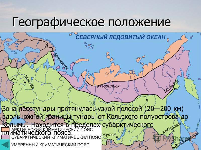 Географическое положение Зона лесотундры протянулась узкой полосой (20200 км) вдоль южной границы тундры от Кольского полуострова до Колымы. Находится в пределах субарктического климатического пояса.