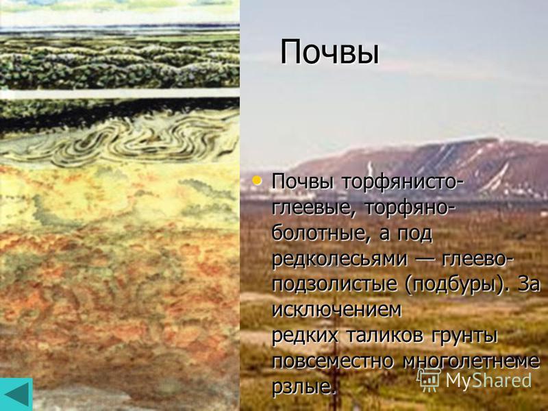 Почвы Почвы торфянисто- глеевые, торфяно- болотные, а под редколесьями глеево- подзолистые (подборы). За исключением редких таликов грунты повсеместно многолетнемерзлые. Почвы торфянисто- глеевые, торфяно- болотные, а под редколесьями глеево- подзоли