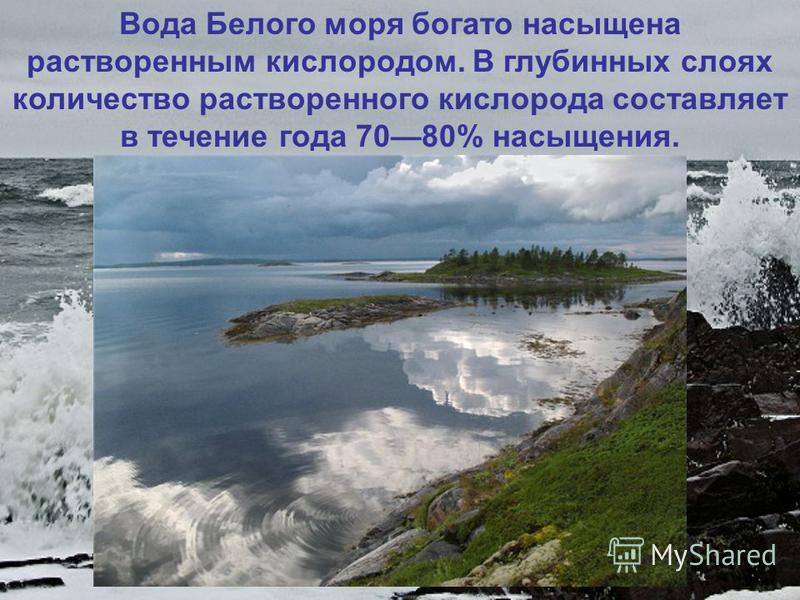 Вода Белого моря богато насыщена растворенным кислородом. В глубинных слоях количество растворенного кислорода составляет в течение года 7080% насыщения.