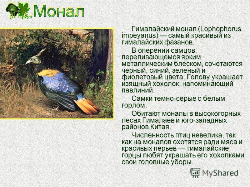 Красный, или рогатый, фазан, или трагопан-сатир (Tragopan satyra), обитает в умеренных и субтропических горных лесах в Передней и Центральной Азии. Это крупная, до 2,2 кг, яркая многоцветная птица. У самцов по бокам головы имеются пучки ярко-синих пе