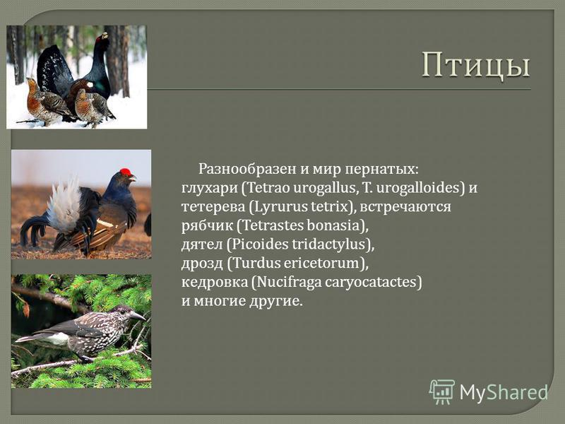 Разнообразен и мир пернатых : глухари (Tetrao urogallus, T. urogalloides) и тетерева (Lyrurus tetrix), встречаются рябчик (Tetrastes bonasia), дятел (Picoides tridactylus), дрозд (Turdus ericetorum), кедровка (Nucifraga caryocatactes) и многие другие