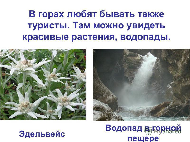 В горах любят бывать также туристы. Там можно увидеть красивые растения, водопады. Эдельвейс Водопад в горной пещере