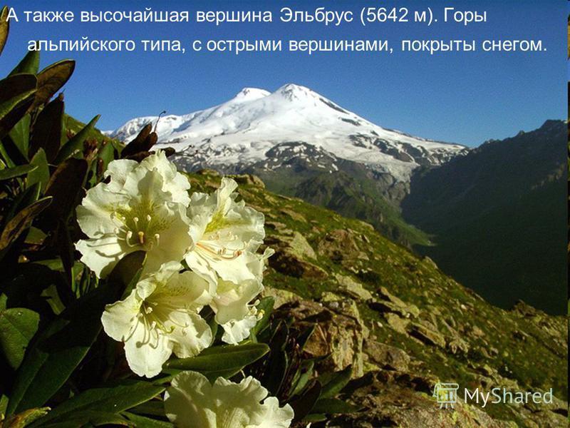 А также высочайшая вершина Эльбрус (5642 м). Горы альпийского типа, с острыми вершинами, покрыты снегом.