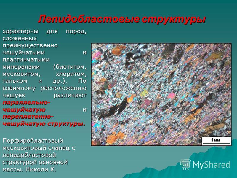 Лепидобластовые структуры характерны для пород, сложенных преимущественно чешуйчатыми и пластинчатыми минералами (биотитом, мусковитом, хлоритом, тальком и др.). По взаимному расположению чешуек различают параллельно- чешуйчатую и переплетенно- чешуй