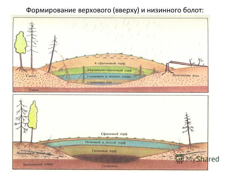 Формирование верхового (вверху) и низинного болот:
