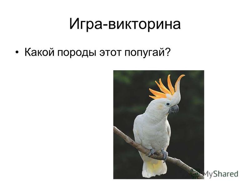 Игра-викторина Какой породы этот попугай?
