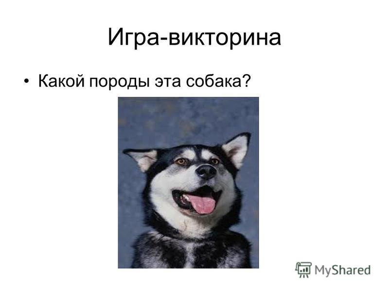 Игра-викторина Какой породы эта собака?