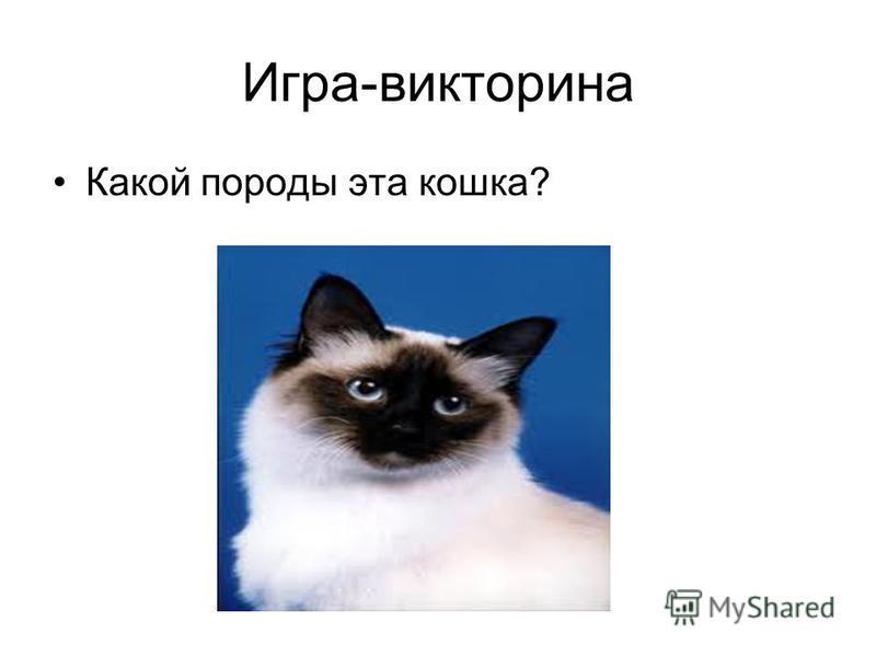 Игра-викторина Какой породы эта кошка?