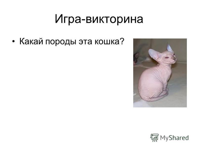 Игра-викторина Какай породы эта кошка?
