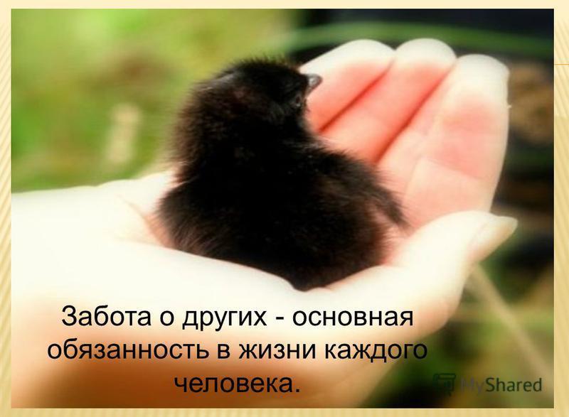 Забота о других - основная обязанность в жизни каждого человека.