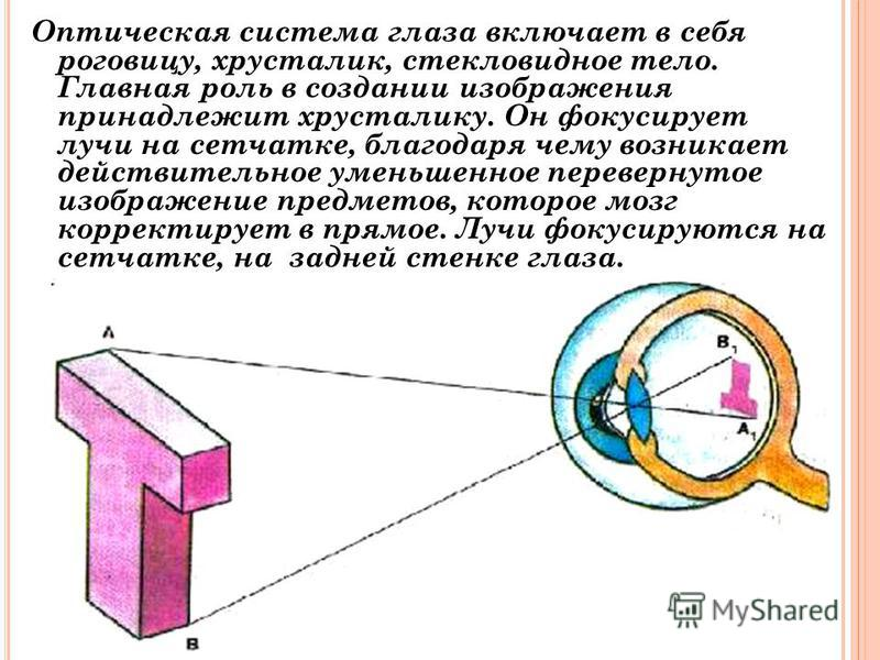 Оптическая система глаза включает в себя роговицу, хрусталик, стекловидное тело. Главная роль в создании изображения принадлежит хрусталику. Он фокусирует лучи на сетчатке, благодаря чему возникает действительное уменьшенное перевернутое изображение