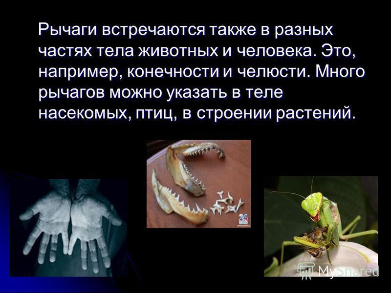 Рычаги встречаются также в разных частях тела животных и человека. Это, например, конечности и челюсти. Много рычагов можно указать в теле насекомых, птиц, в строении растений. Рычаги встречаются также в разных частях тела животных и человека. Это, н
