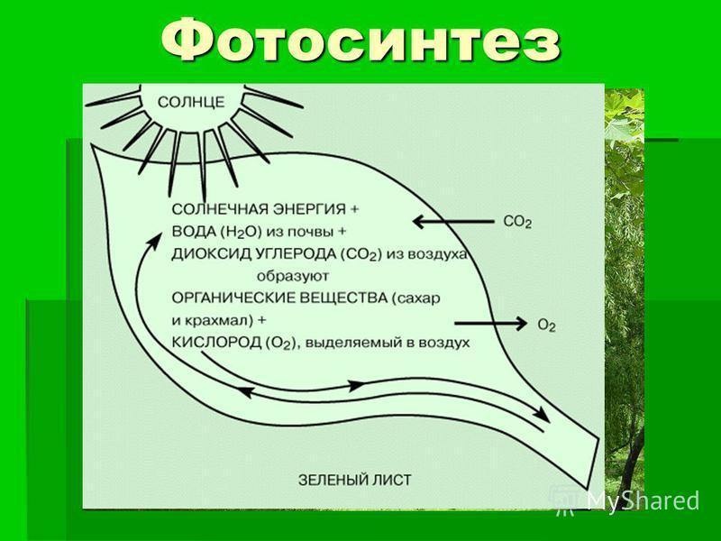 План урока фотосинтез 9 класс