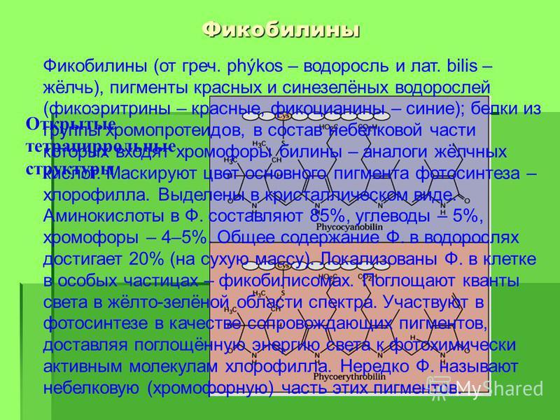 Фикобылины Открытые тетрапиррольные структуры Фикобылины (от греч. phýkos – водоросль и лат. bilis – жёлчь), пигменты красных и синезелёных водорослей (фикоэритрины – красные, фикоцианины – синие); белки из группы хромопротеидов, в состав небелковой