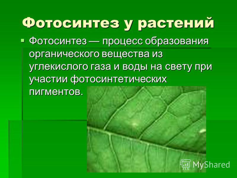 Фотосинтез у растений Фотосинтез процесс образования органического вещества из углекислого газа и воды на свету при участии фотосинтетических пигментов. Фотосинтез процесс образования органического вещества из углекислого газа и воды на свету при уча