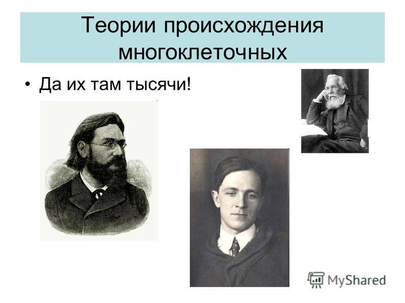 Теории происхождения многоклеточных Да их там тысячи!