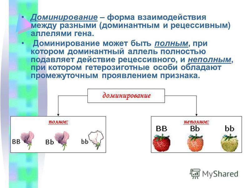 Доминирование – форма взаимодействия между разными (доминантным и рецессивным) аллелями гена. Доминирование может быть полным, при котором доминантный аллель полностью подавляет действие рецессивного, и неполным, при котором гетерозиготные особи обла