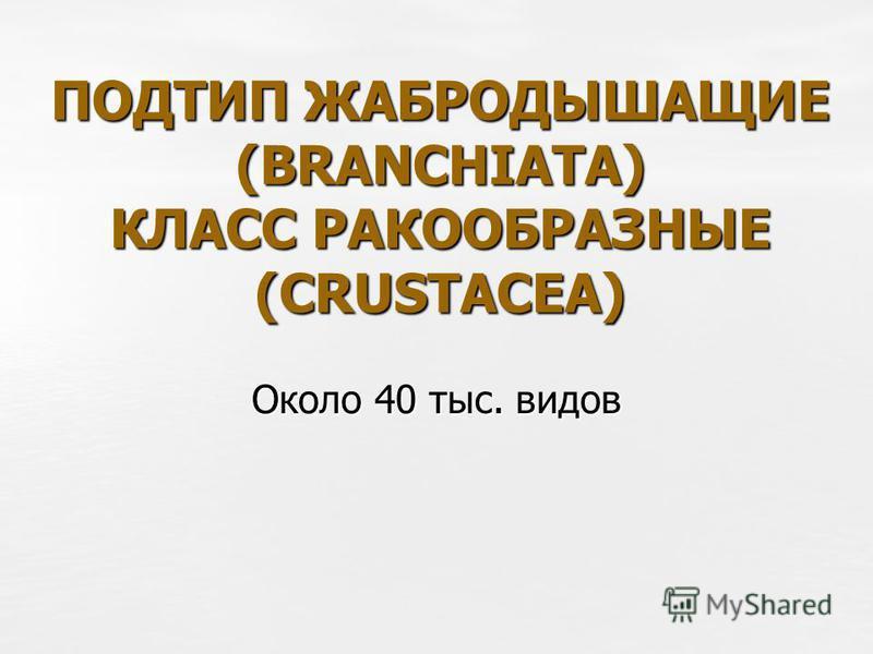 ПОДТИП ЖАБРОДЫШАЩИЕ (BRANCHIATA) КЛАСС РАКООБРАЗНЫЕ (CRUSTACEA) Около 40 тыс. видов