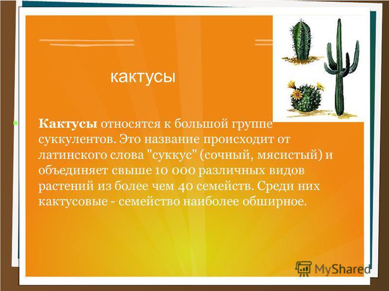 кактусы Кактусы относятся к большой группе суккулентов. Это название происходит от латинского слова