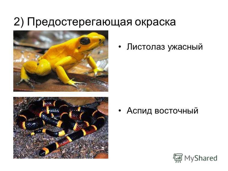2) Предостерегающая окраска Листолаз ужасный Аспид восточный