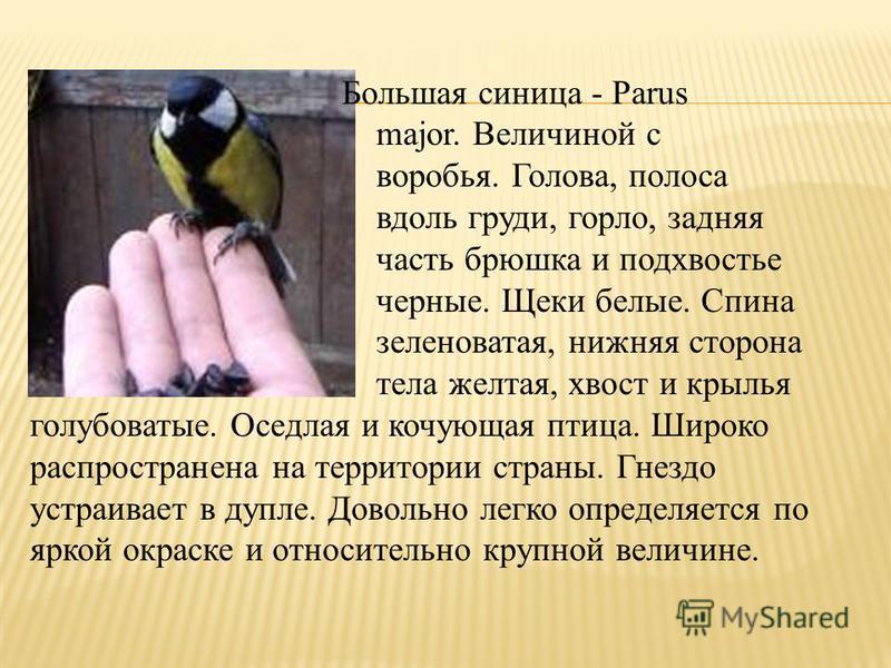 Большая синица - Parus major. Величиной с воробья. Голова, полоса вдоль груди, горло, задняя часть брюшка и подхвостье черные. Щеки белые. Спина зеленоватая, нижняя сторона тела желтая, хвост и крылья голубоватые. Оседлая и кочующая птица. Широко рас
