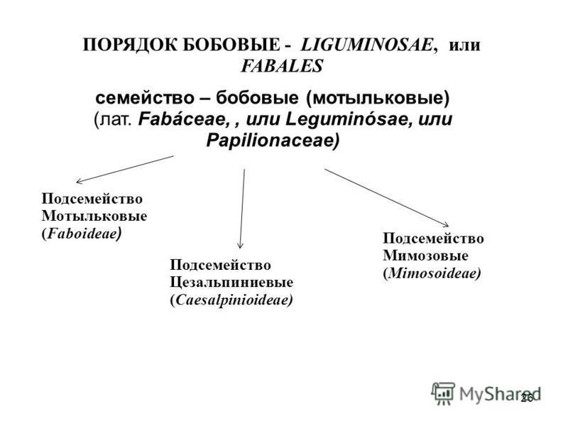 ПОРЯДОК БОБОВЫЕ - LIGUMINOSAE, или FABALES семейство – бобовые (мотыльковые) (лат. Fabáceae,, или Leguminósae, или Papilionaceae) Подсемейство Мотыльковые (Faboideae ) Подсемейство Цезальпиниевые (Caesalpinioideae) Подсемейство Мимозовые (Mimosoideae