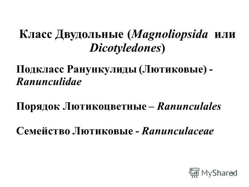 Подкласс Ранункулиды (Лютиковые) - Ranunculidae Порядок Лютикоцветные – Ranunculales Семейство Лютиковые - Ranunculaceae Класс Двудольные (Magnoliopsida или Dicotyledones) - 7