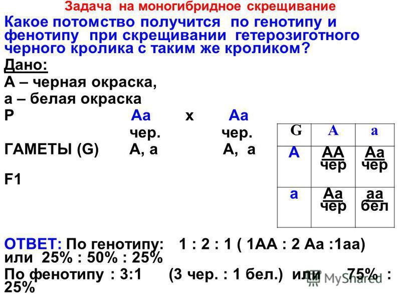 Задача на моногибридное скрещивание Какое потомство получится по генотипу и фенотипу при скрещивании гетерозиготного серного кролика с таким же кроликом? Дано: А – серная окраска, а – белая окраска Р Аа х Аа сер. сер. ГАМЕТЫ (G) А, а А, а F1F1 ОТВЕТ: