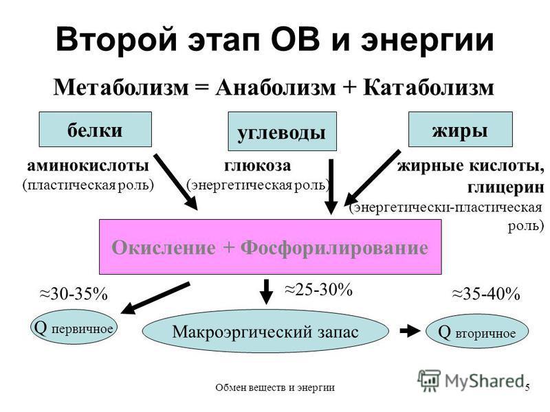 Второй этап ОВ и энергии Метаболизм = Анаболизм + Катаболизм белки углеводы жиры аминокислоты (пластическая роль) глюкоза (энергетическая роль) жирные кислоты, глицерин (энергетически-пластическая роль) Окисление + Фосфорилирование Q первичное Макроэ